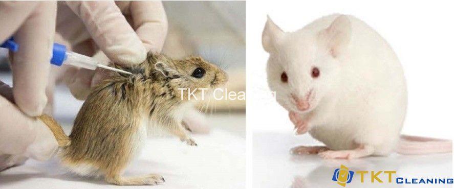 phòng siêu sạch nuôi động vật